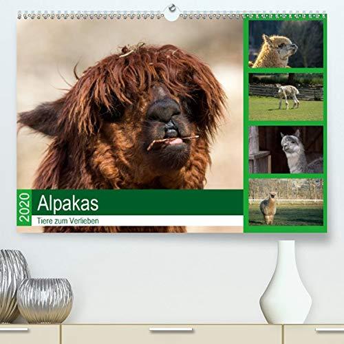 Alpakas - Tiere zum Verlieben(Premium, hochwertiger DIN A2 Wandkalender 2020, Kunstdruck in Hochglanz): Natürliche Fotografien von freundlichen Alpakas. (Monatskalender, 14 Seiten ) (CALVENDO Tiere)