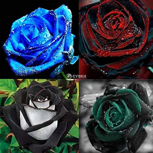 Plantree Rosso: 50 pezzi Rose Seeds Rose Piante da fiore Giardino Bonsai Piante perenni Dz88 03