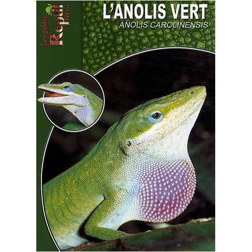 L'Anolis Vert: Anolis Carolinensis