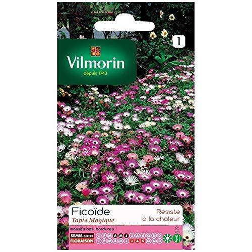 Vilmorin - Sachet graines Ficoïde Tapis magique