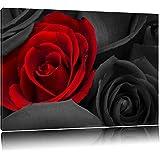roses rouges romantiques noir / blanc sur toile, énorme XXL photos