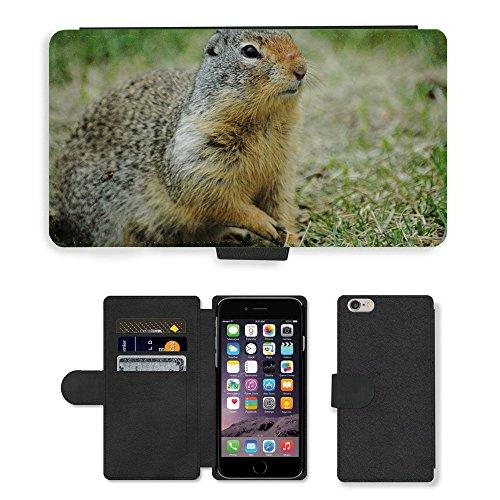 Just Mobile pour Hot Style Téléphone portable étui portefeuille en cuir PU avec fente pour carte//m00138295sol écureuil écureuil herbe//Apple iPhone 6Plus 14cm