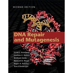 DNA Repair and Mutagenesis