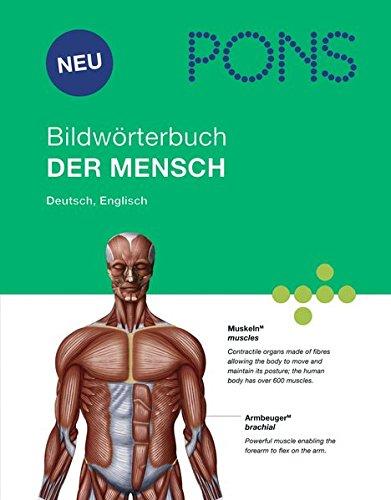 PONS Bildwörterbuch Der Mensch: Rund 1700 Begriffe in Bild und Wort, Englisch und Deutsch