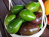 PLAT FIRM GERMINATIONSAMEN: 5 Stück Avocado Persea americana Samen Thai Seltene Früchte Samen Riesen Choquette D121