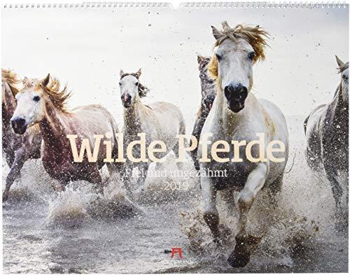 Wilde Pferde 2019, Wandkalender im Querformat (54x42 cm) - Tierkalender / Pferdekalender mit Monatskalendarium
