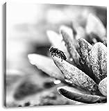 Monocrome, Winziges Biene auf Seerosenblüte, Format: 70x70 auf Leinwand, XXL riesige Bilder fertig gerahmt mit Keilrahmen, Kunstdruck auf Wandbild mit Rahmen, günstiger als Gemälde oder Ölbild, kein Poster oder Plakat