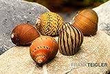 Wirbellose Rennschnecken-Bundle: 5X Rennschnecke im Farbmix