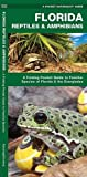 Florida Reptiles & Amphibians: A Folding Pocket Guide to Familiar Species of Florida & the Everglades (A Pocket Naturalist Guide)