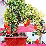 50pcs/bag Bonsai Granatapfelkernen sehr süß Delicious Obstkerne, ausdauernde Succulenten Baum Samen kleine Bonsai für Heim & Garten