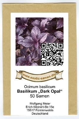 """Ocimum basilicum - Basilikum """"Dark Opal"""" - 50 Samen von exotic-samen bei Du und dein Garten"""
