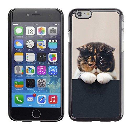 GooooStore/Housse Etui Cas Coque - Cute Sleepy Kitten Cat Pet Feline Paw - Apple Iphone 6 Plus 5.5