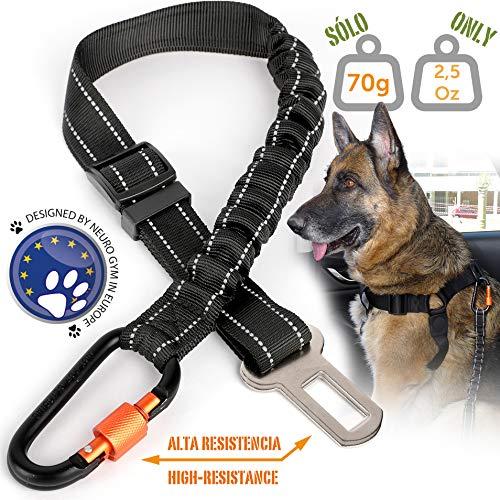 Cinturón seguridad extensible arnés perro. Previene