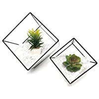 UltraByEasyPeasyStore 2 Square Cube Shaped Glass Terrarium Planters For Air Plants Cactus Small Succulents Or Wedding Centrepiece or Gifts 10x10x10cm & 15x15x15