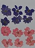 HANDI-KAFU purple pink Larkspur real pressed dried flowers