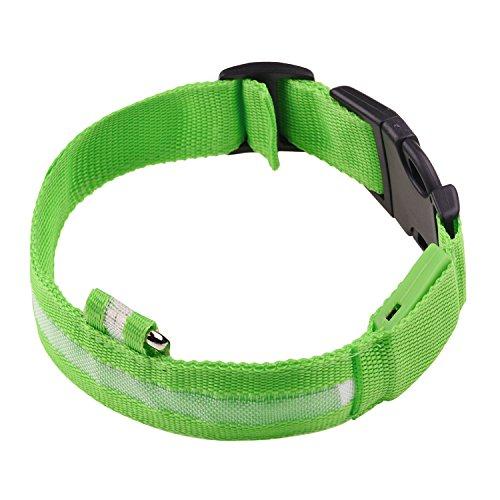 Bild: Sijueam LED Hundehalsband Halsband Leuchthalsband mit USB Kabel für Haustier Hunden Leuchtendes Halsbänder Wetterfest Robust Nylon Grün L