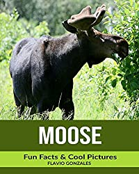 Moose: Fun Facts & Cool Pictures