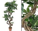 Ficus, Kunstbaum mit Spiralstamm natur, Höhe 160cm - künstliche Bäume Kunstbaum Kunst Pflanzen