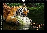 Welt der Katzen - Tiger (Wandkalender 2018 DIN A4 quer): Kalender mit stimmungsvollen Tigeraufnahmen aus Zoologischen Gärten (Monatskalender, 14 ... [Kalender] [Apr 01, 2017] Skupin, Marcus