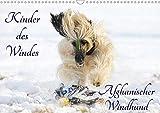 Kinder des Windes - Afghanischer Windhund (Wandkalender 2020 DIN A3 quer): Die ganze Faszination dieser wundervollen Hunderasse auf 13 Fotos (Monatskalender, 14 Seiten ) (CALVENDO Tiere)