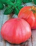 Las semillas de tomate rosa gigante Markiz rusa de la herencia no GMO