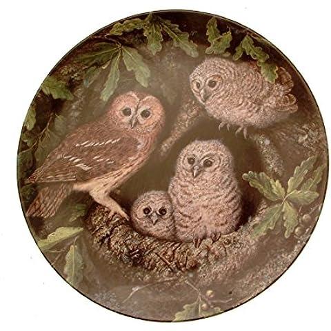 En el nido cárabo común seguro y de Dick Twinney joven búho GB175