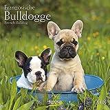 Französische Bulldogge 2018: Broschürenkalender mit Ferienterminen. Hunde-Kalender. 30 x 30 cm