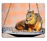 Mousepads Young Fox Eichhörnchen Eichhörnchen (Gattung) Niger sitzend auf Futterhaus und Essen Samen Bild-ID 19855502von Liili Individuelle Mousepads fleckenresistenz Collector Kit Küche Tisch Top Schreibtisch Drink Individuelle fleckenresistenz Collector Kit Küche Tisch Top Schreibtisch