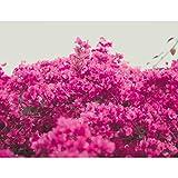 Premium Fototapete Pinke Blumen 396 x 280 cm - 9 Bahnen- Vliestapete -Modern jedes Zimmer - Wand Dekoration - 3D Tapete aus Vlies 9074812a