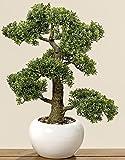 Home Collection Arredamento, decorazione, piante artificiali - Bosso Comune bonsai artificiale in vaso - materiale: plastico - colore: naturale - dim. H ca 48 cm