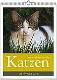 Wochenwandkalender: Katzen - literarisch durchs Jahr 2019. Vierfarbig, Format 24 x 32 cm