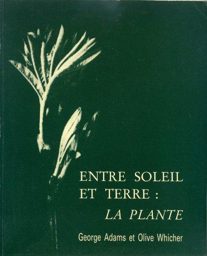 Entre soleil et terre : la plante