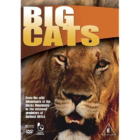 Wildlife - Big Cats - Big Black Book