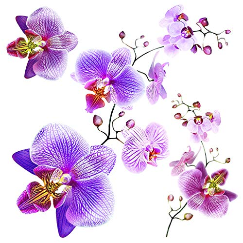 AG Design SS 3859 Orchideen, Wand Sticker, Colorful, 30 x 30 cm