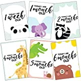 #7: WOBBOX Baby Monthly 0-12 Months Growth Milestones Cards - Pack of 13 (Multicolour, WOB93)