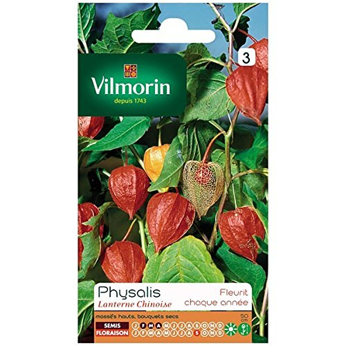 Vilmorin - Sachet graines Physalis Lanterne chinoise