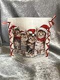 Stimmungslicht'weihnachtliche Katzen'