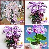Venta al por mayor 120pcs / lot 24 tipos diferentes de orquídeas multicolores mariposa semillas de flor de semillas Phalaenopsis bricolaje plantadores de marihuana en casa