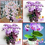 All'ingrosso 120pcs / lot 24 diversi tipi multicolore farfalla Orchidea Phalaenopsis semi di fiore di semi di fai da te fioriere casa pot