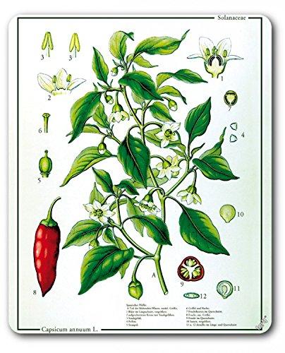 Preisvergleich Produktbild 1art1 89682 Kochkunst - Die Chili Pflanze Mauspad 23 x 19 cm