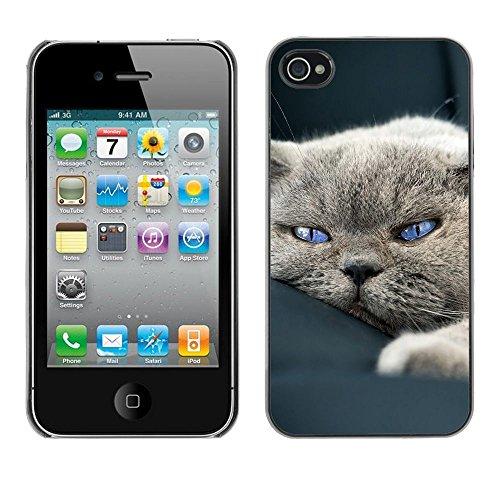 TopCaseStore / caoutchouc Hard Case Housse de protection la Peau - Cute Sleepy Cat House British Shorthair - Apple iPhone 4 / 4S