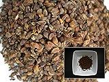 Grande Pimprenelle - 0,10 grammes - Sanguisorba Officinalis - Great Burnet