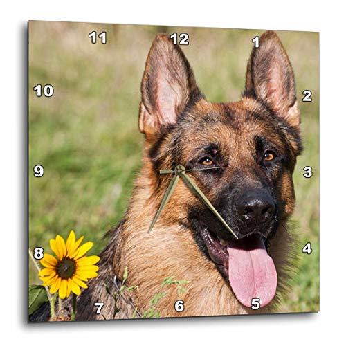 3dRose Portrait of Deutscher Schäferhund–US32zmu0080–Zandria Muench Beraldo–Wanduhr, 10von 25,4cm (DPP 145330_ 1)