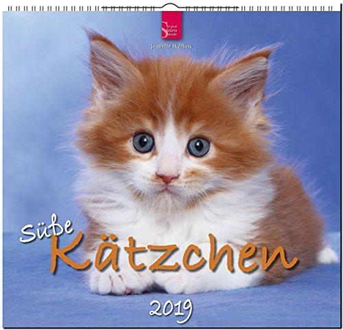 Süße Kätzchen 2019: Mittelformat-Kalender