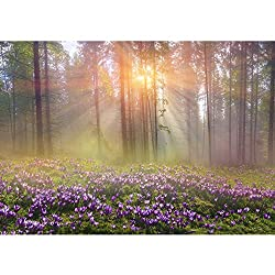Non-Woven Photographic Wallpaper 350x245cm–Top Quality Premium Plus Photo Wallpaper Wall Picture XXL Decorative Wall Picture Wall Mural Photo Wallpaper Forest Trees Nature No. 239