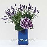 50 PCS Blattpflanzen Bonsai Ahorn-Samen grün und lila Farbe Rot Ahorn Bonsai Samen
