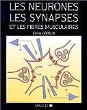 Image de Les neurones, les synapses et les fibres musculaires