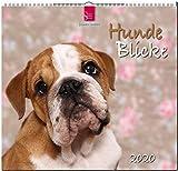 HundeBlicke: Original Stürtz-Kalender 2020 - Mittelformat-Kalender 33 x 31 cm