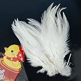 50 St. gefärbte Hahn Federn für Deko 10 -15 cm - weiß