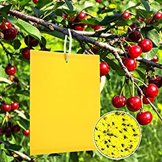 ZOORE 50Pcs Eco Friendly Yellow Sticky Flys Catcher Professional Dual-Sided Pest Traps Flycatcher Paper, 20x15cm Fungus Gnats Stickers Board for Indoor and Outdoor Plant Protection & Pest Control